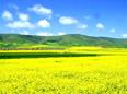 青海安康粮油集团食用油生产线
