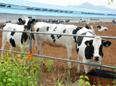 贵德良种奶牛繁育中心